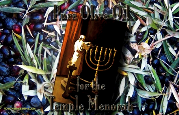 pure-olive-oil-produced-for-use-in-third-jewish-temple-institute-jerusalem-israel