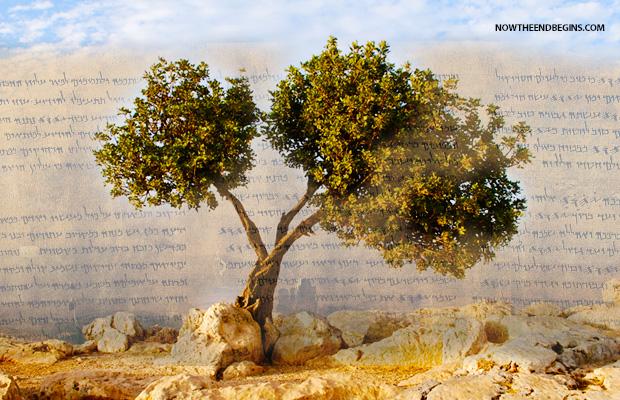 eretz-israel-promised-land-of-zion-capital-city-jerusalem