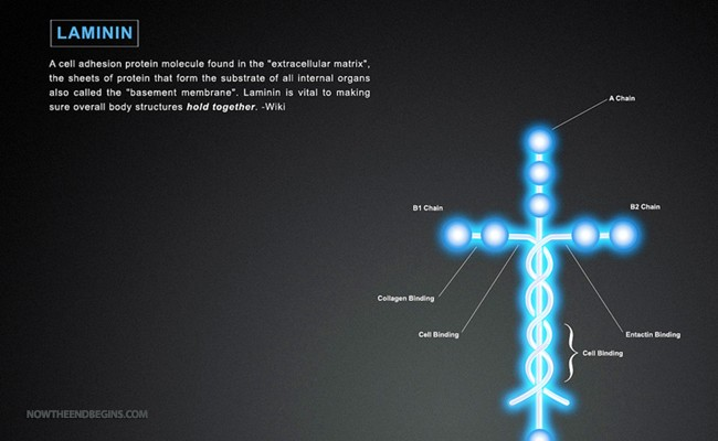 louie-giglio-laminin-nteb-now-end-begins-bible-science