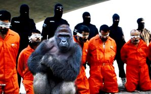 liberal-media-covered-harambe-gorilla-six-times-more-than-isis-killing-christians-nteb
