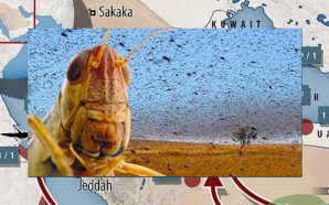 united-nations-warns-locust-outbreak-red-sea-egypt-saudi-arabia-2019-biblical-plague-locusts