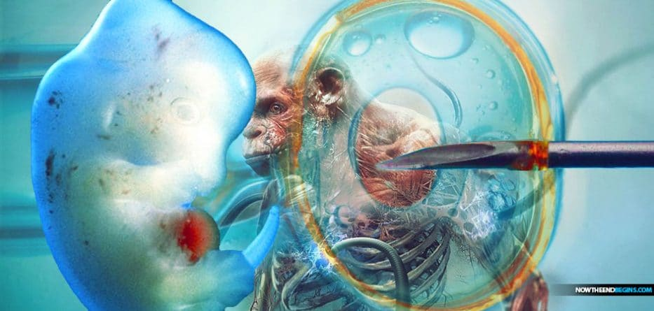 Human-animal hybrids to be developed in Japan after ban controversially lifted