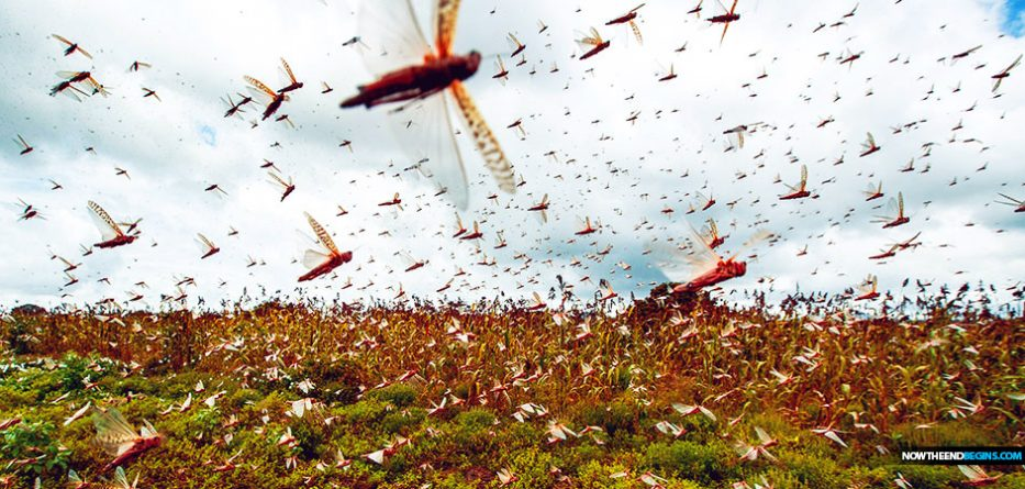 """Like Something Out Of The Book Of Exodus"": Locust Armies Are Devouring Entire Farms In Kenya ""In As Little As 30 Seconds"""