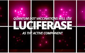 Bill Gates is building something that we call the Human Implantable Quantum Dot Microneedle Vaccination Delivery System, and it needs an enzyme called luciferase to make it work.