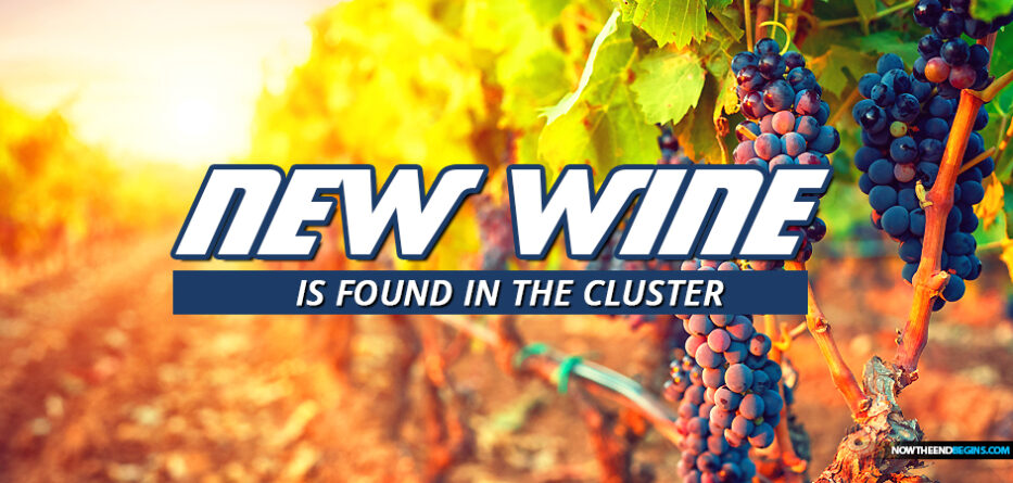 new-wine-found-in-cluster-fruit-of-vine-jesus-wedding-feast-miracle-marriage-cana-galilee